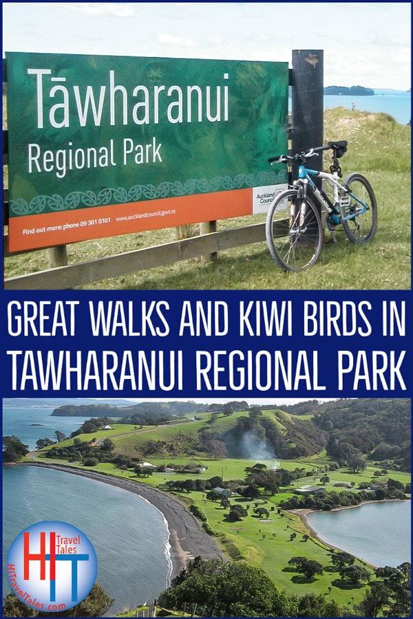 Great Walks And Kiwi Birds In Tawharanui Regional Park