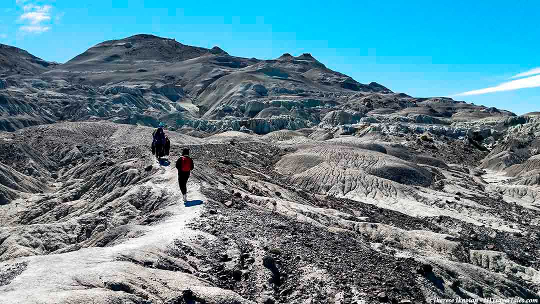 The petrified forest in the Best of Patagonia
