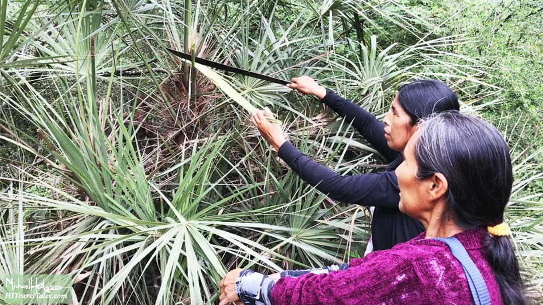 Qom women cutting leaves with a machette.