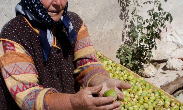 A Croatian lady and her figs