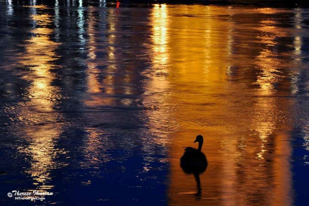 Photographing Old Sacramento river reflections with a goose at night.