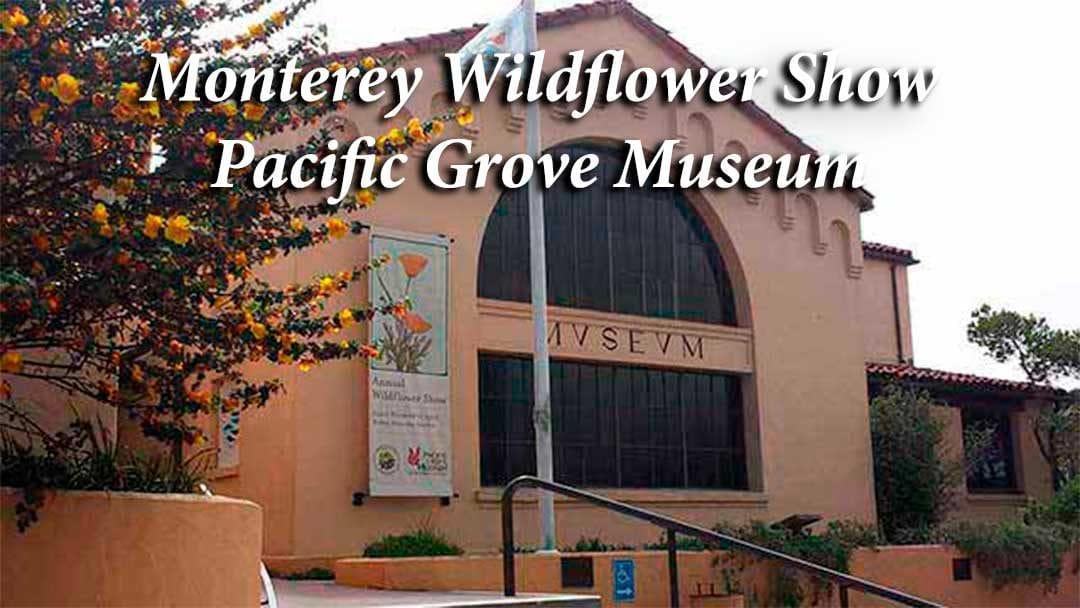 Monterey Wildflowers Pacific Grove Museum Annual Wildflower Show