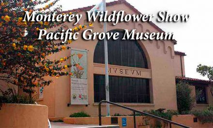 Monterey Wildflowers: Spectacular shows at Pacific Grove Museum