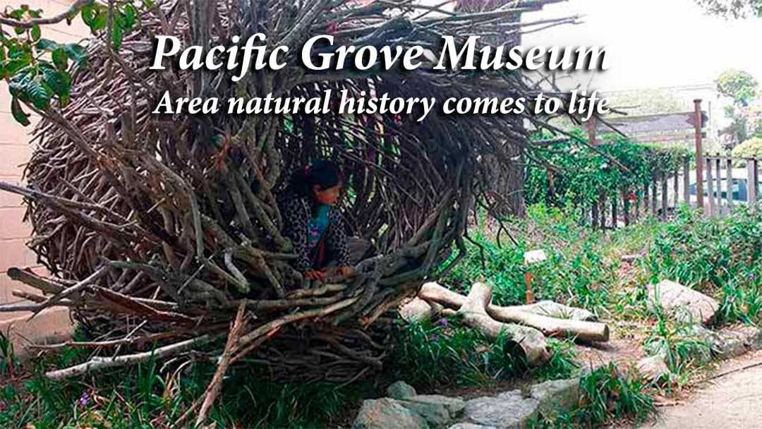Pacific Grove Museum spirit nest