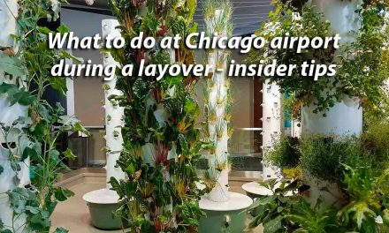 What to do at Chicago airport during a layover – insider tips
