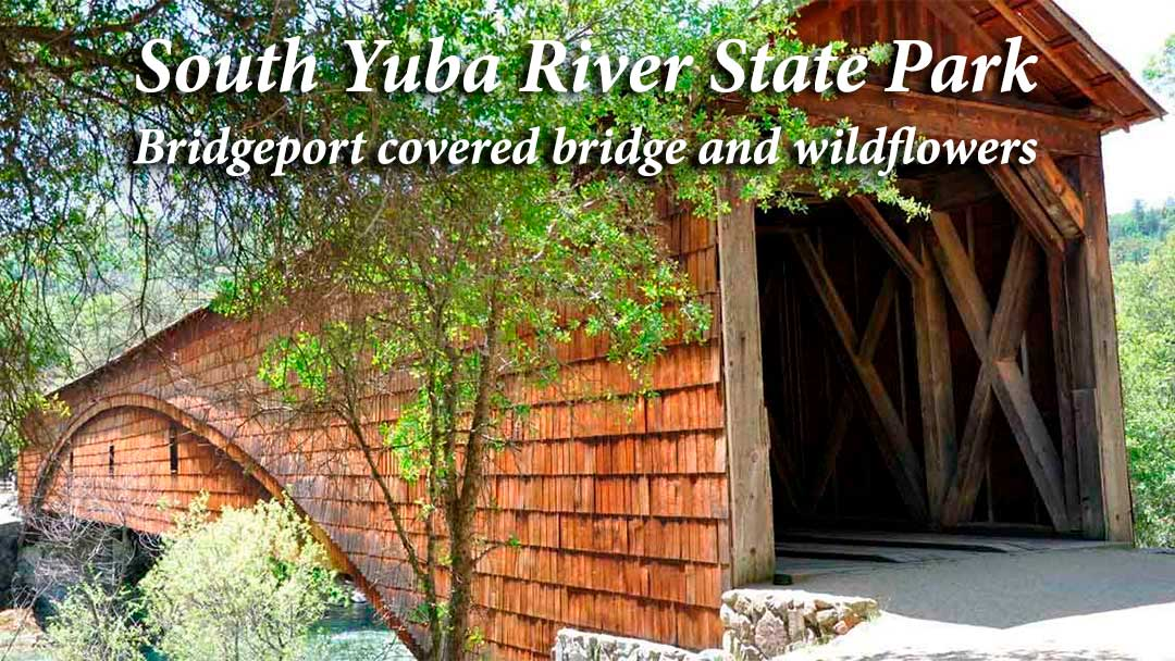 South Yuba River State Park: Bridgeport covered bridge and wildflowers