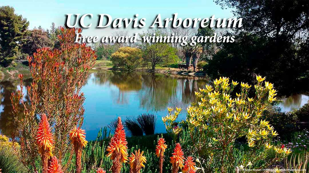 UC Davis Arboretum: free award-winning gardens