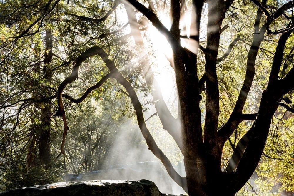 Yosemite Valley sunburst photo one of two
