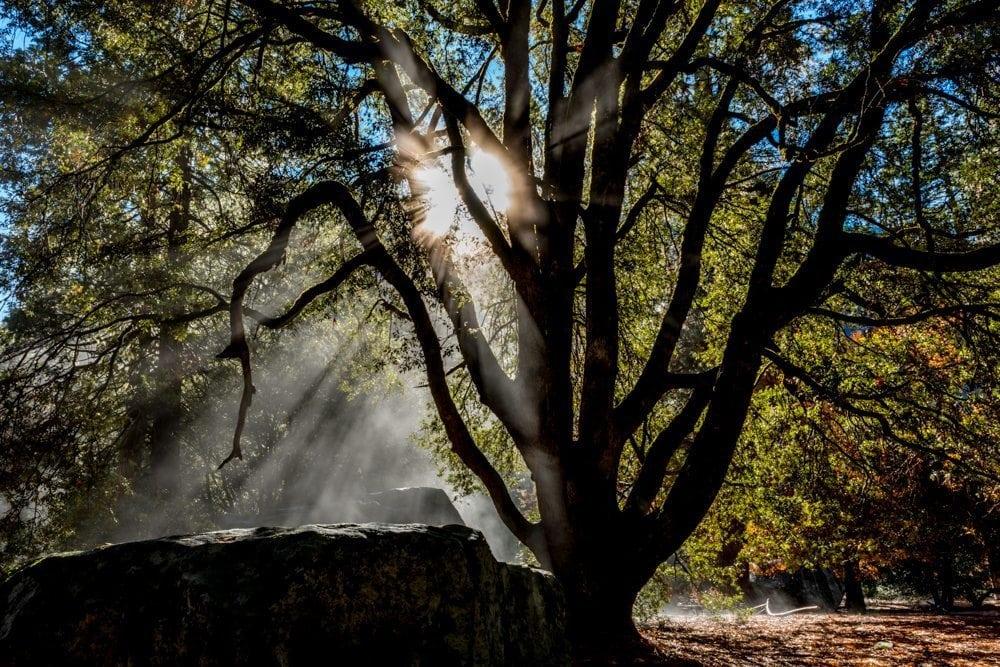 Yosemite Valley sunburst photo two of two
