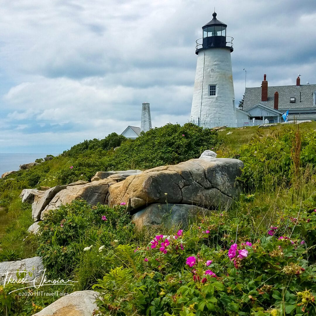 Maine Pemaquid Flowers