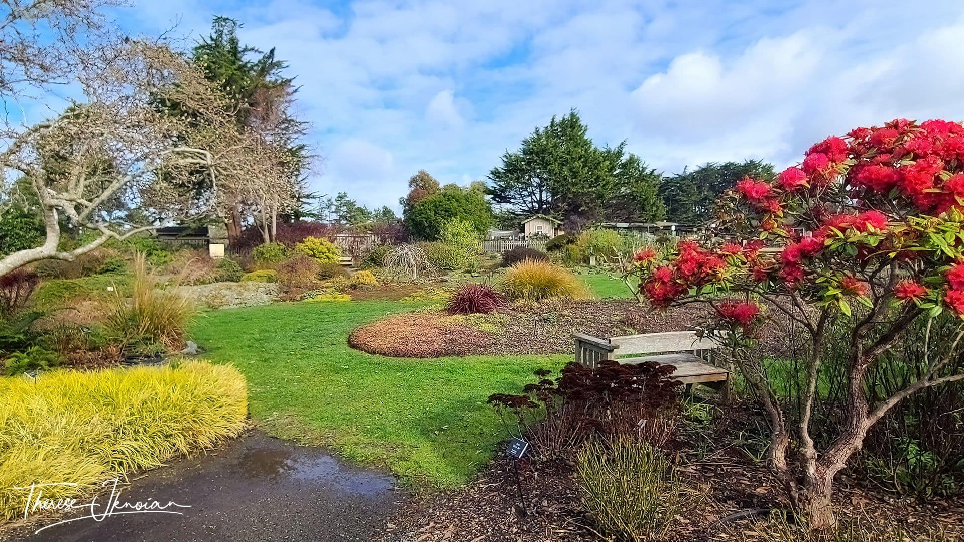 Mendocino Botanic Garden Groomed Lawn