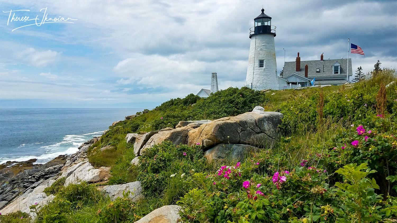 MidCoast Maine Lighthouses Pemaquid Day Pink Flowers