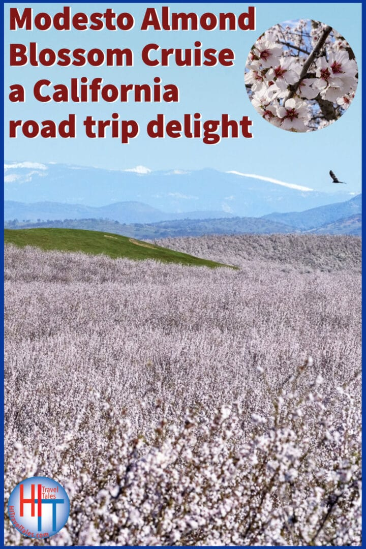 Modesto Almond Blossom Cruise A California Road Trip Delight