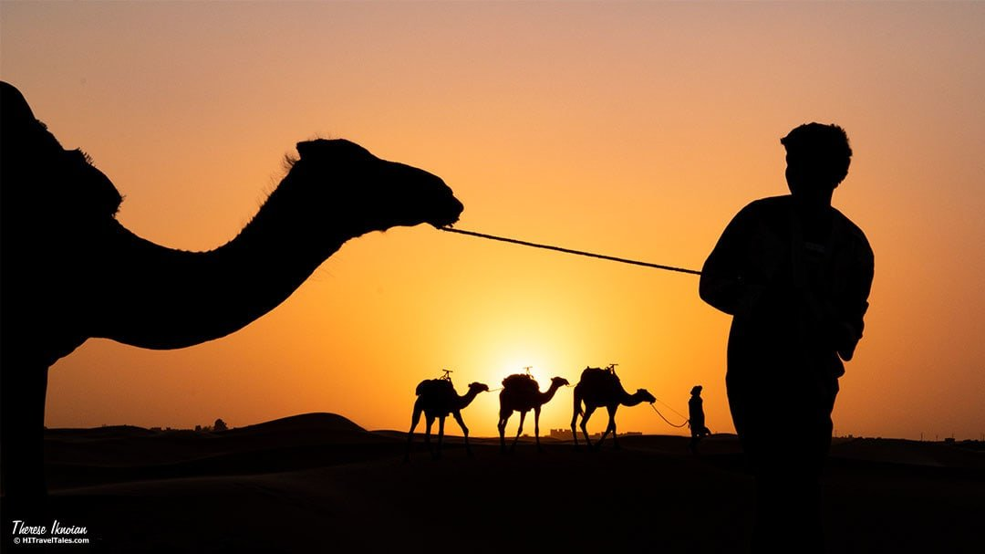 Camels silhouettes at sunset in the Sahara