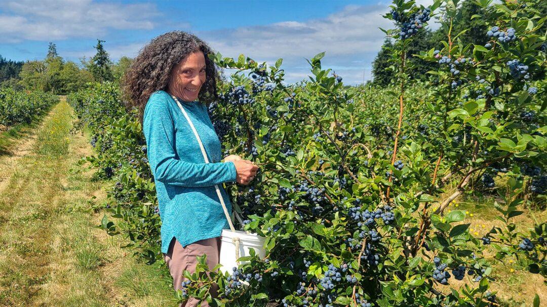 Mutiny Bay Blues Therese Picking