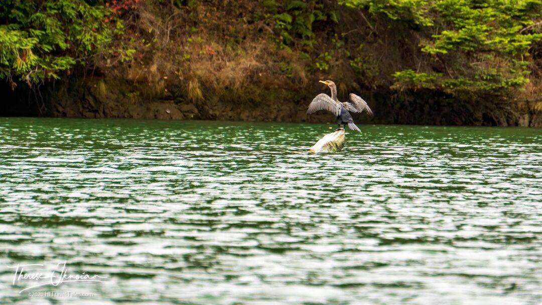 Noyo Meander Bird Taking Off