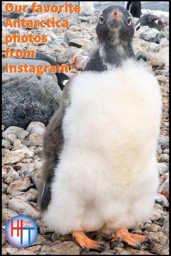 Our Favorite Antarctica Photos From Instagram
