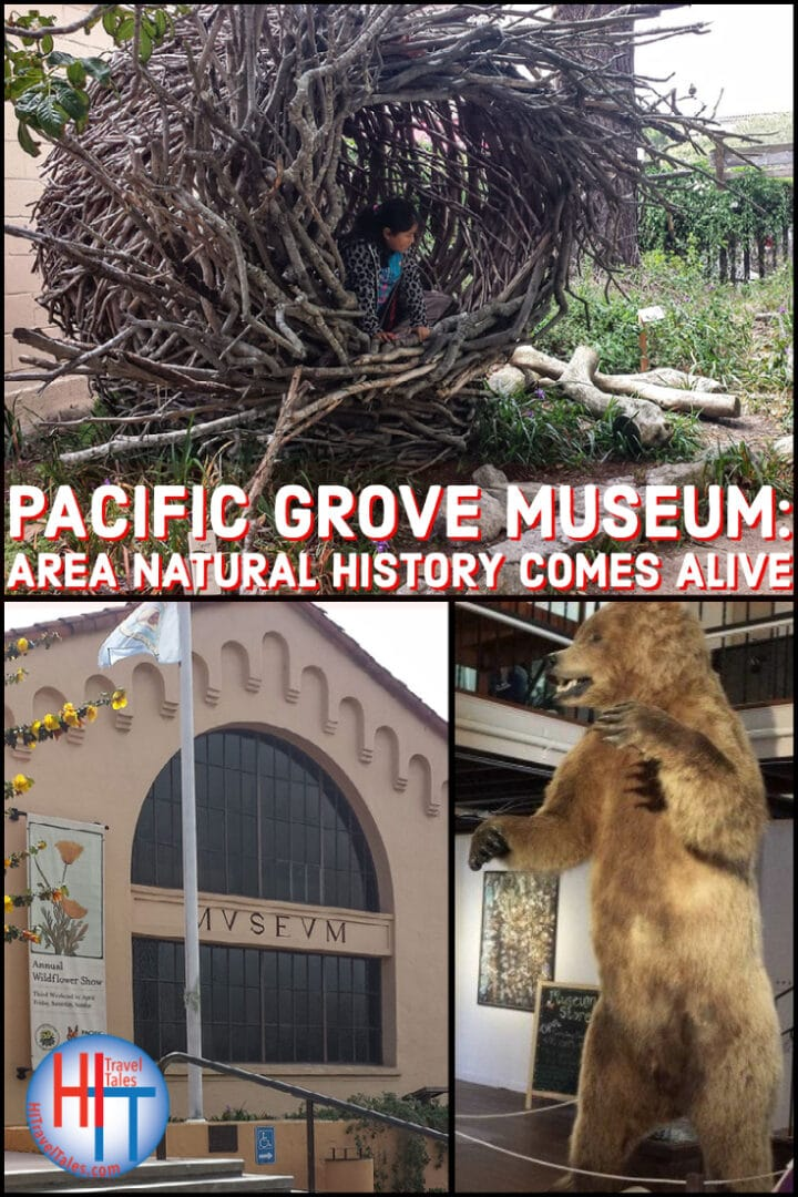 Pacific Grove Museum Area Natural History Comes Alive