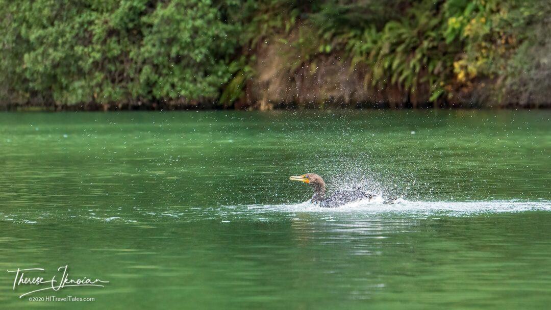 Paddle Noyo Bird Splash
