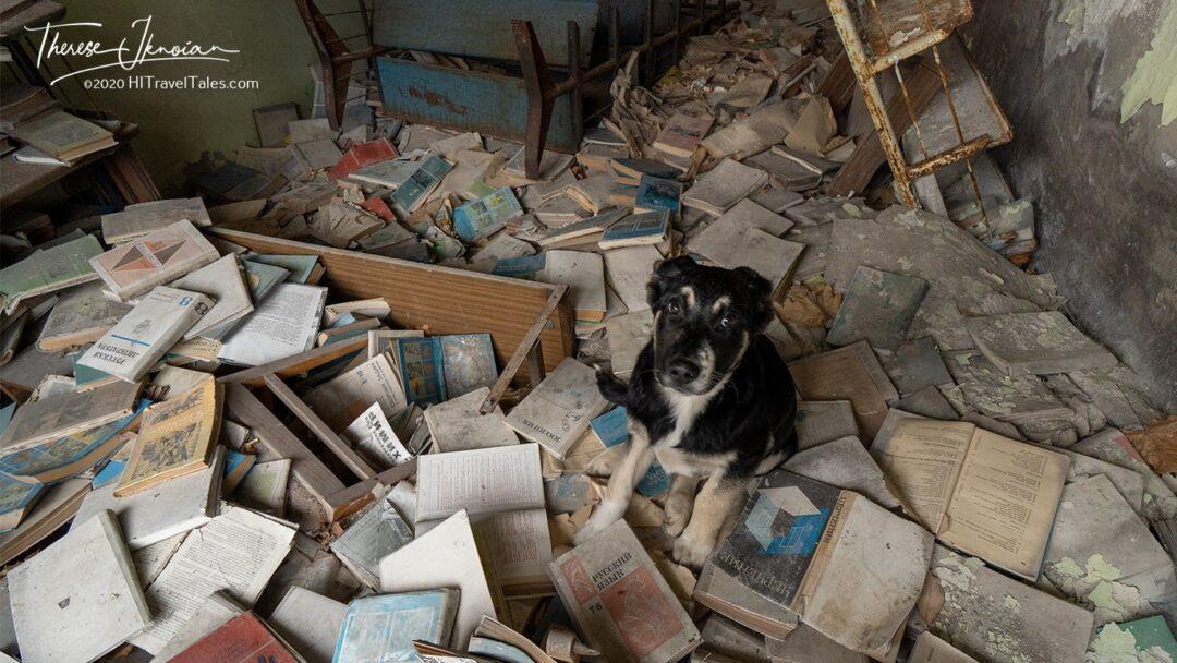 Pripyat Abandoned Dogs Puppies