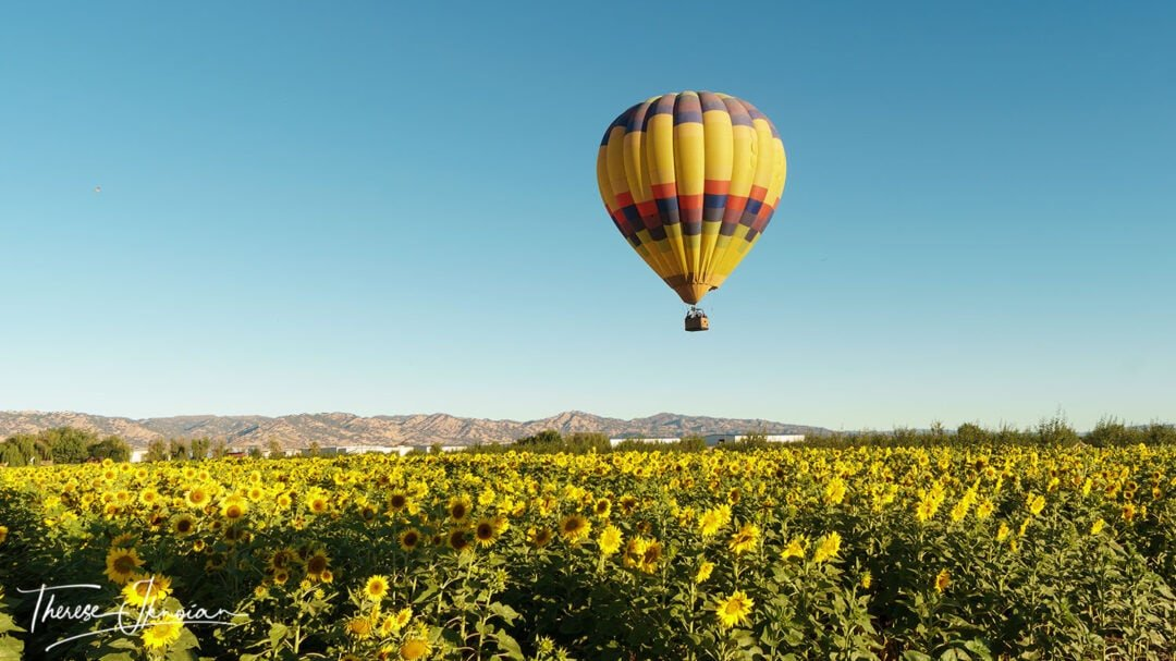 Sunflower Fields Photo Gallery Balloon
