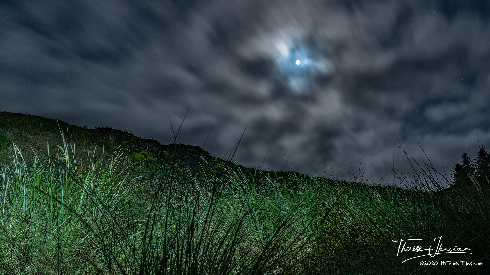 Learning Night Photography - Grasses Bathed In Full Moonlight