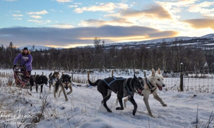 Dog sledding in Norway: Mush your own husky team