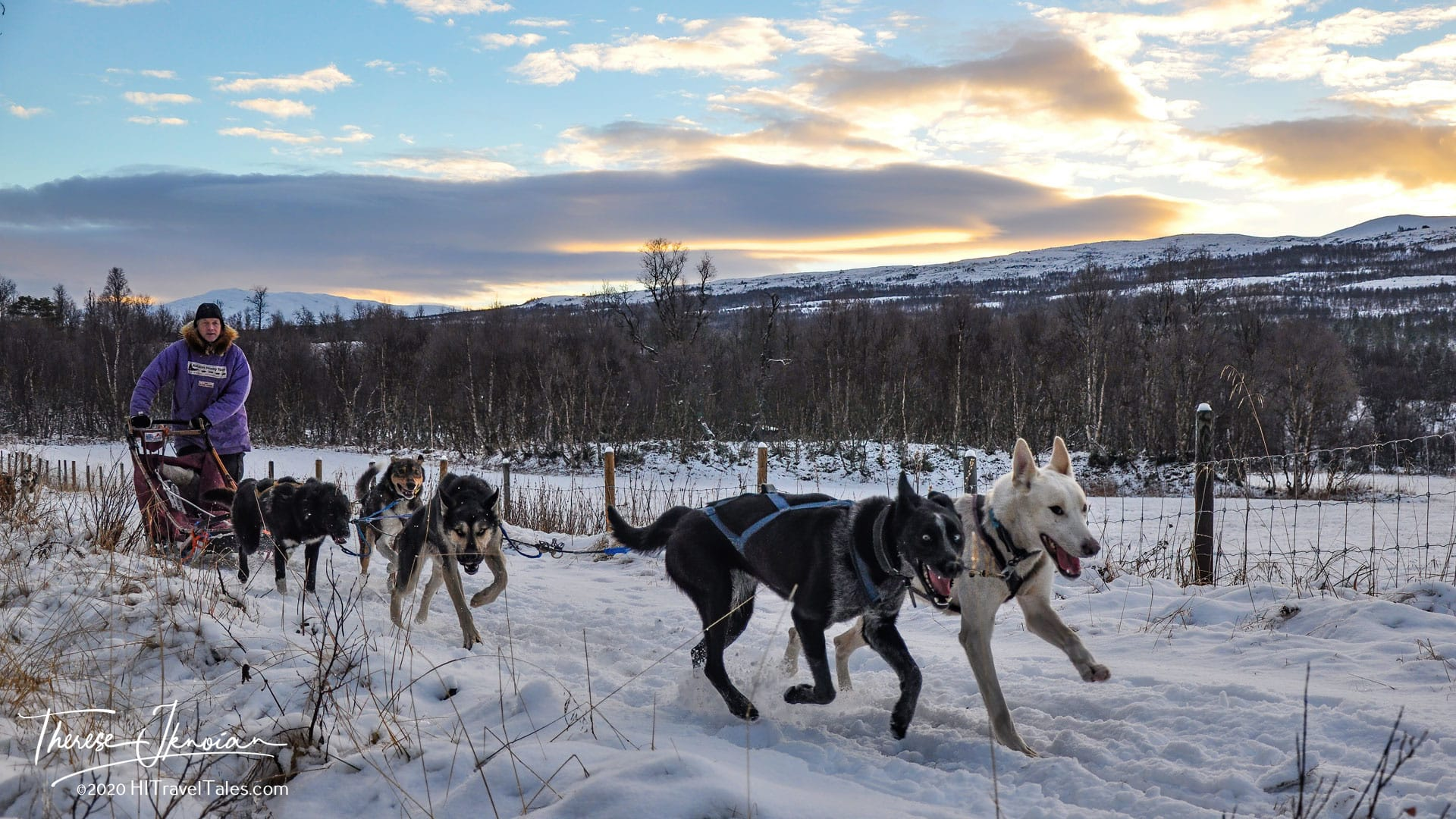 Dog Sledding in Norway At Sunset With Alaskan Husky Tours In Roros