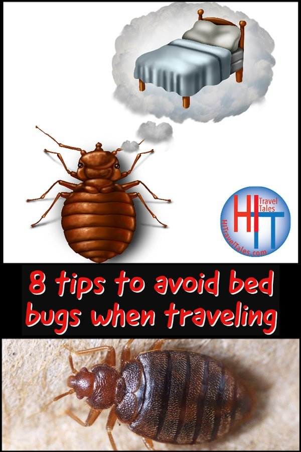 Eight Tips To Avoid Bed Bugs When Traveling