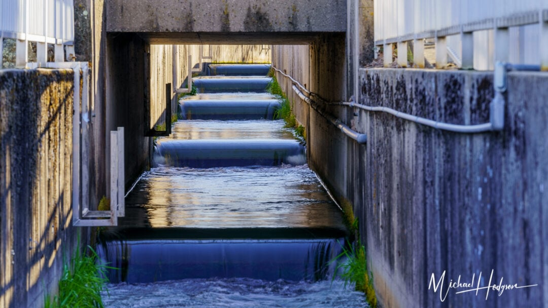 Feather River Fish Hatchery Fish Ladders