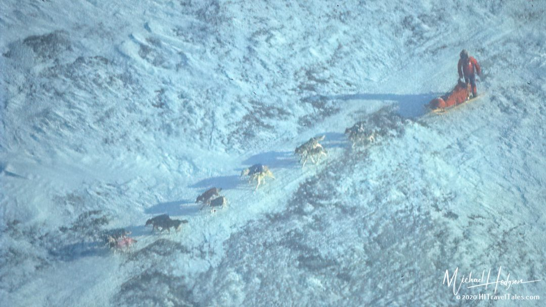 A Musher And Team Racing Towards Nome In The 1994 Iditarod