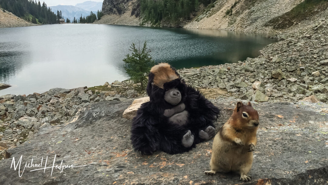 Jojo And His Chipmunk Friend