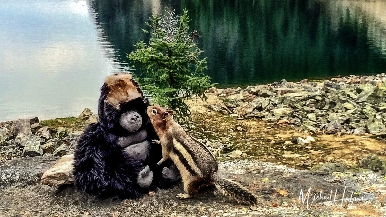 Jojo Meets A New Chipmunk Friend