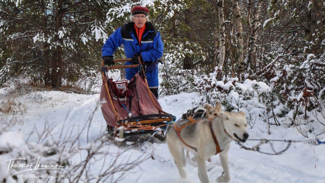 Michael Hodgson Dog Sledding In Roros, Norway