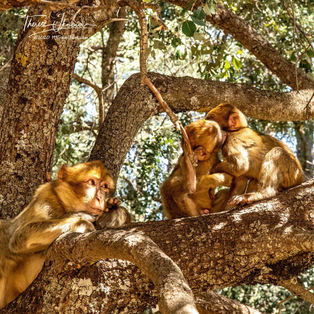 Morocco Monkey Homeschool