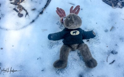 Mukluk experienced his first snowfall and first snow angel