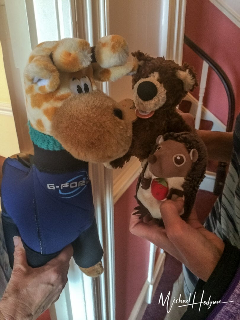 Orso And Elbe Meet Charlie In Cornwall