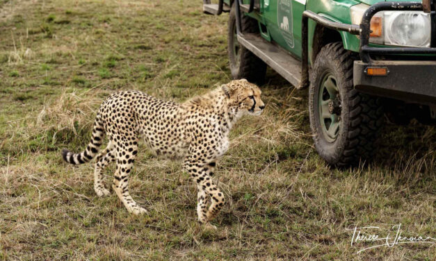 Packing for a safari: What not to forget on a safari packing list