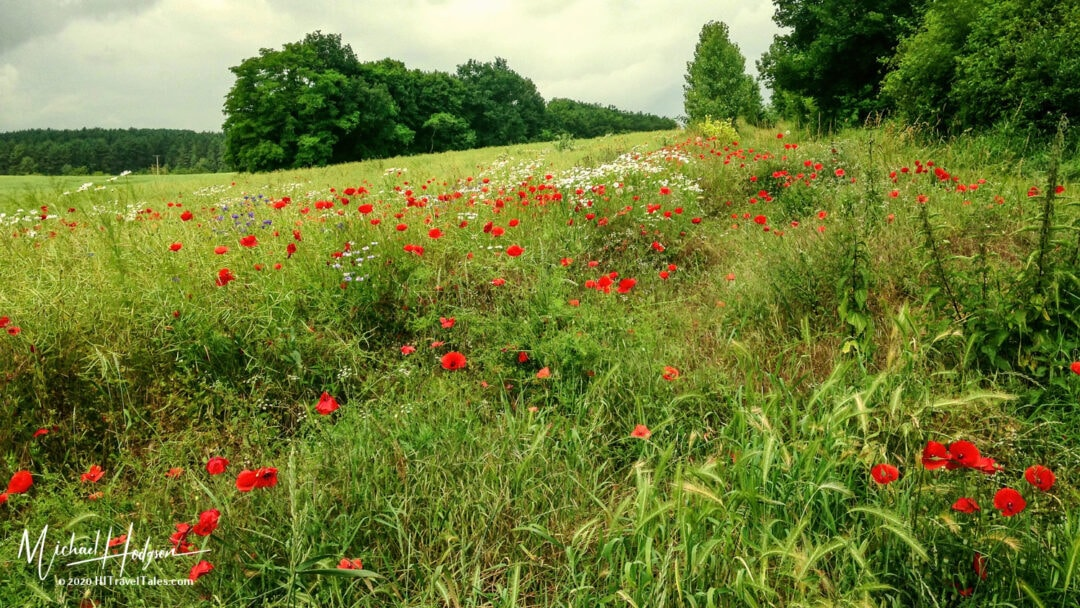 Poppies In A Field Above Quedlinburg In The Harz Mountains
