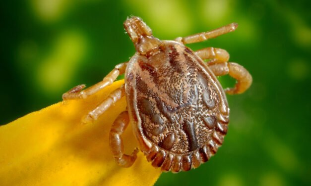 Why I hate ticks and how to prevent tick bites