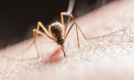 Top 3 tips to protect yourself from Zika virus