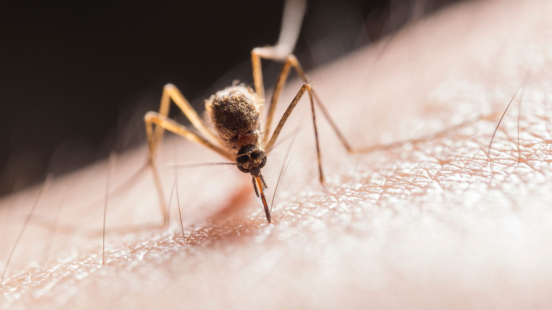Protect Yourself From Zika Virus
