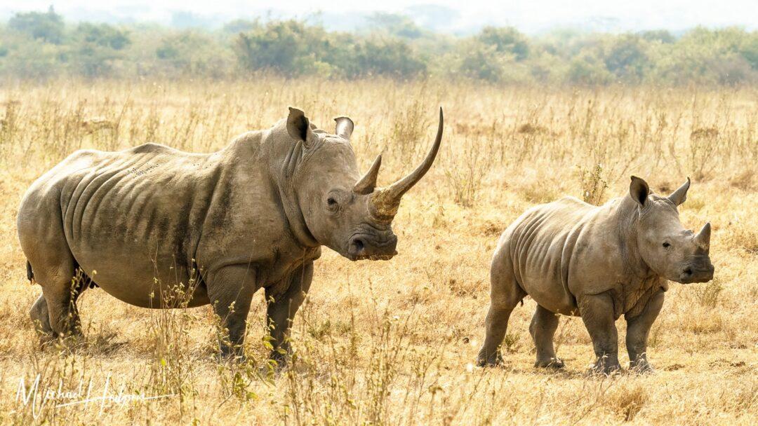Rhino Mom Junior Solio Rhino Preserve