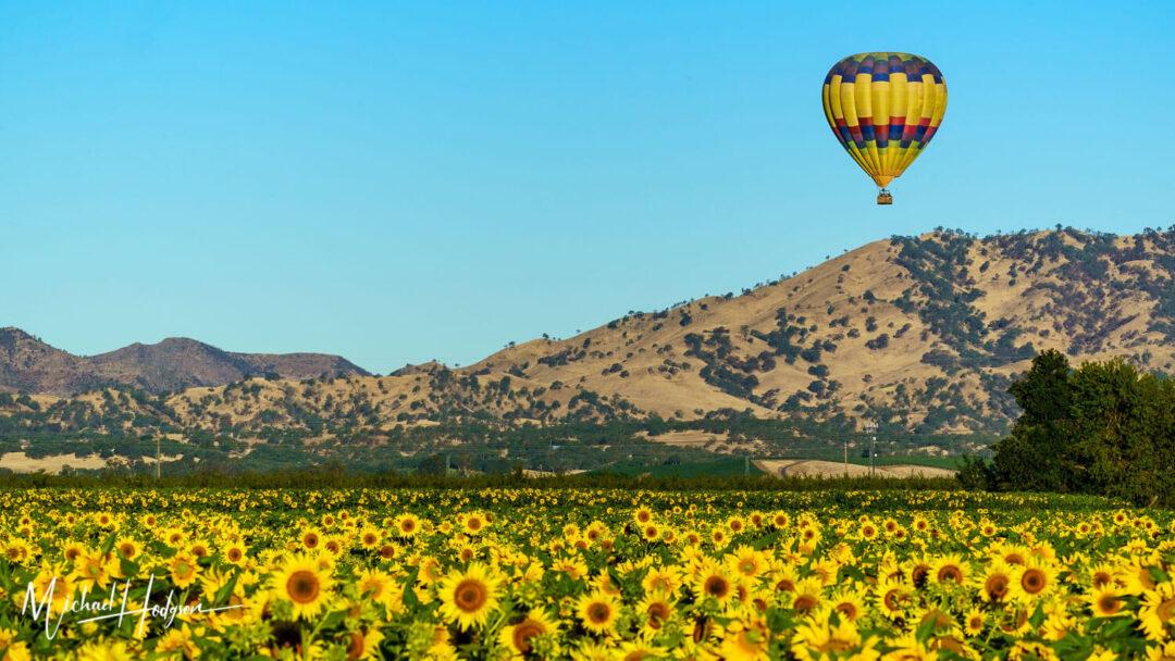 Yolo Ballooning Adventures Winters Sunflowers