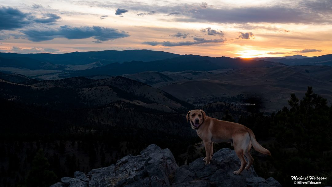 Zeke At Sunset From The Summit Of Mount Helena